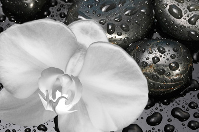 Photo of flat black wet stones with a single white flower over them as a symbol of Sugar Land holistic dentistry from Dr. Siny Thomas.